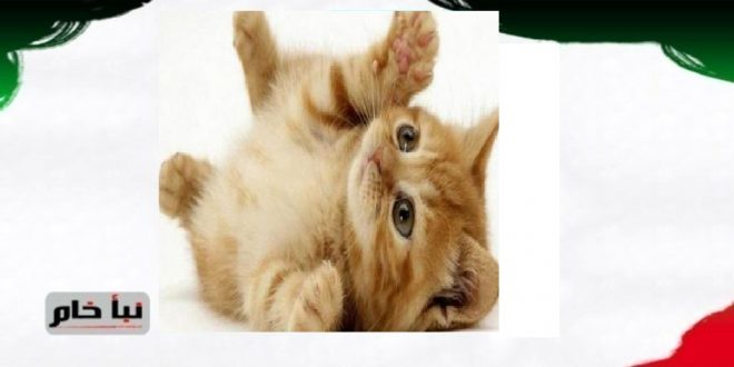 القطة الخائنة